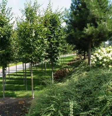 tereny zielone osiedle mieszkaniowe Radom